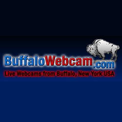 Link to BuffaloWebCam website